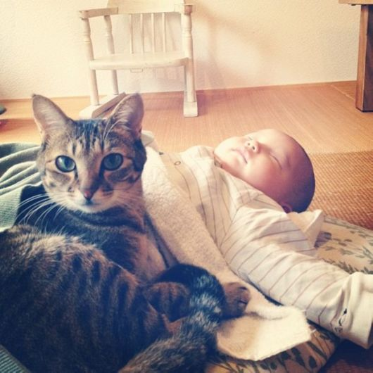 Inseparable Bond Of Tabby Cat And His Baby Brother