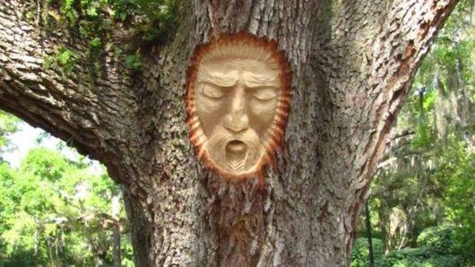 Creative Tree Bound Installations