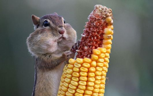 Funny Photos Of Animals Eating That Will Make You Smile