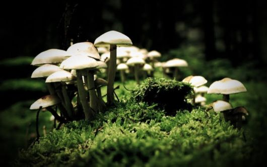 Magic Mushroom Can Probably Cure Depression That Medicines Cannot