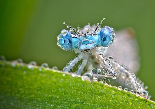 Fantastic Dew Effects On Insects