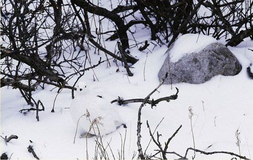 Can You Find The Hidden Bird In The Photo?