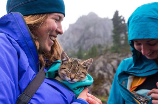 Adventure Lover Abandoned Kittens Taken Over By A Family