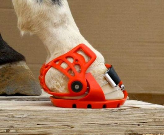 Awesome Creative Horse Shoes