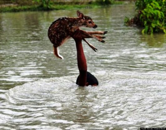 Heroes Who Risked Their Lives To Rescue Animals In Distress