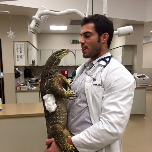 Awesome Benefits Of Working At An Animal Hospital