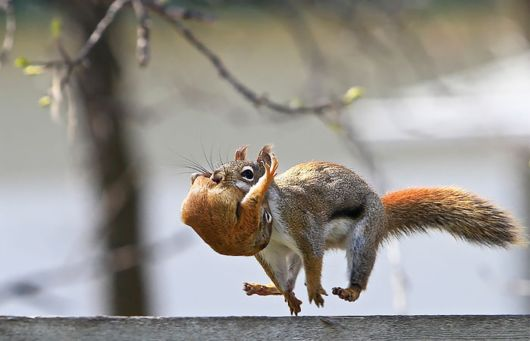 Loving Pics To Celebrate Squirrel Appreciation Day