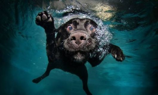 Some Stunning Photographs Of Dogs